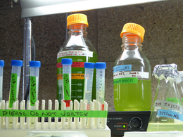 algae experiments