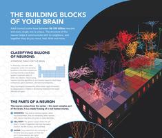 Allen Institute Poster of Building Blocks of Your Brain