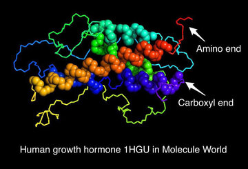 Human growth hormone in Molecule World - image credit Sandra Porter
