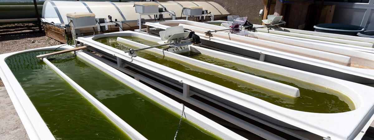 Algae ponds at Santa Fe Community College
