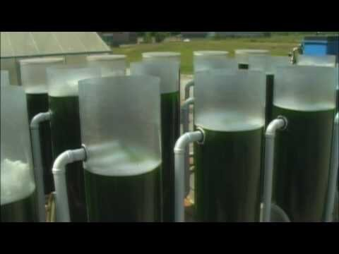 Biofuels from Algae Project
