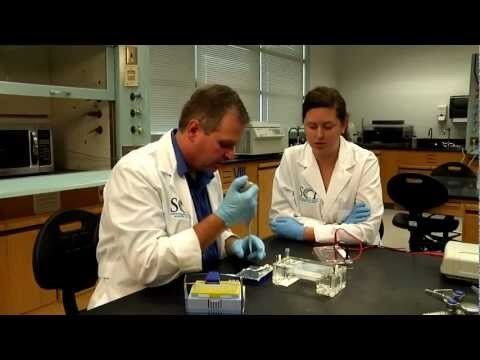 An overview of the Biotechnology program